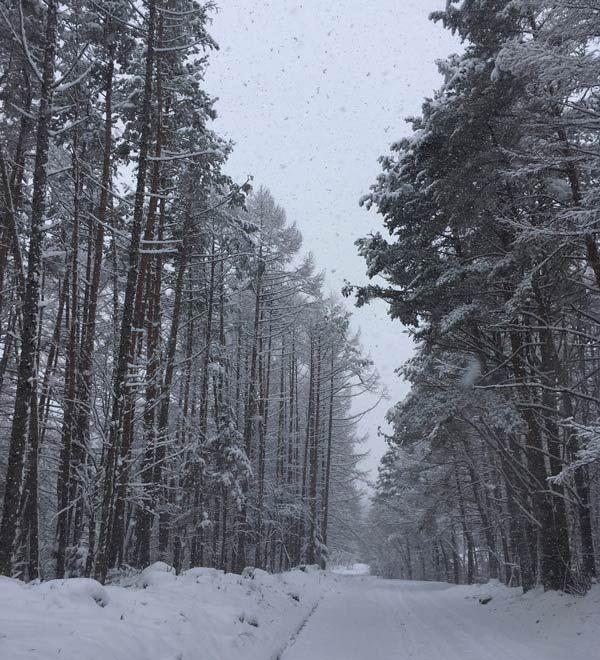 写真:積もった雪