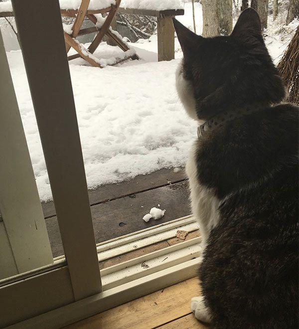 写真:猫と雪