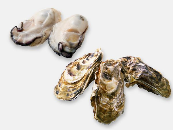 かき(牡蠣)