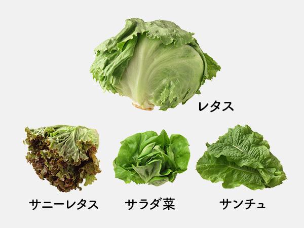 レタス、サニーレタス、サラダ菜、サンチュ